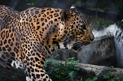 Wildlife in Tamilnadu